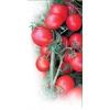 Семена томата Асвон F1 фирмы Китано